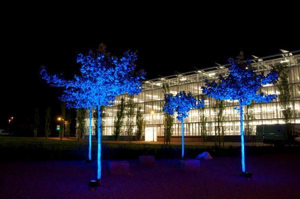 Beleuchtung, Scheinwerfer, Strahler, blaues Licht, Bäume, angestrahlt, Effektbeleuchtung, Nacht Agentur Rindle, hms